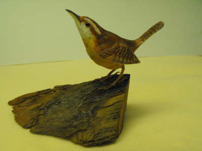 Carolina Wren ER-DM-7